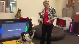 How FIDO helps working dogs communicate with their owners
