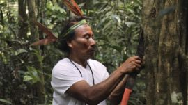 Fighting COVID-19 with Ancestral Wisdom in the Amazon