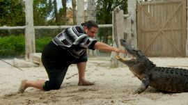 The Seminole Tribe Perfected Alligator Wrestling