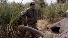 The Video of the N.R.A.'s Leader and His Wife Shooting Elephants