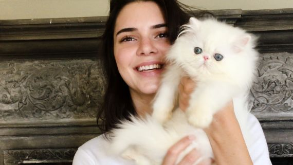 Kendall Jenner Meets the World's Cutest Kitten