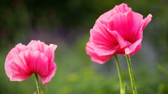 This Designer's Picturesque Garden Has Over 150 Different Species of Flowers