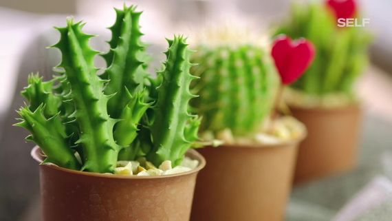 10 Easy Houseplants That Anyone Can Keep Alive