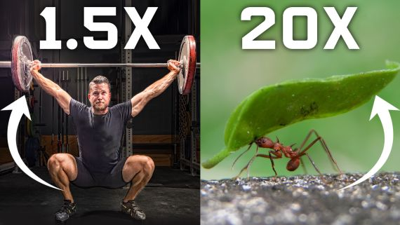 Why Humans Can't Lift as Much as Ants (And How We Could)