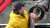 Scientist Explains Viral Fish Cannon Video